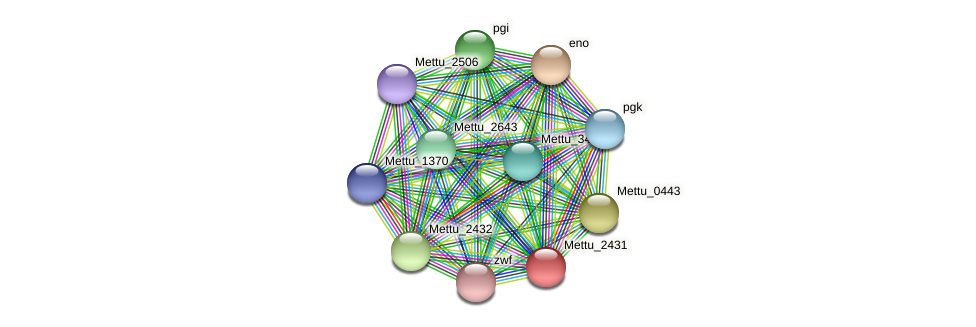 Mettu_2431 protein (Methylobacter tundripaludum) - STRING interaction network