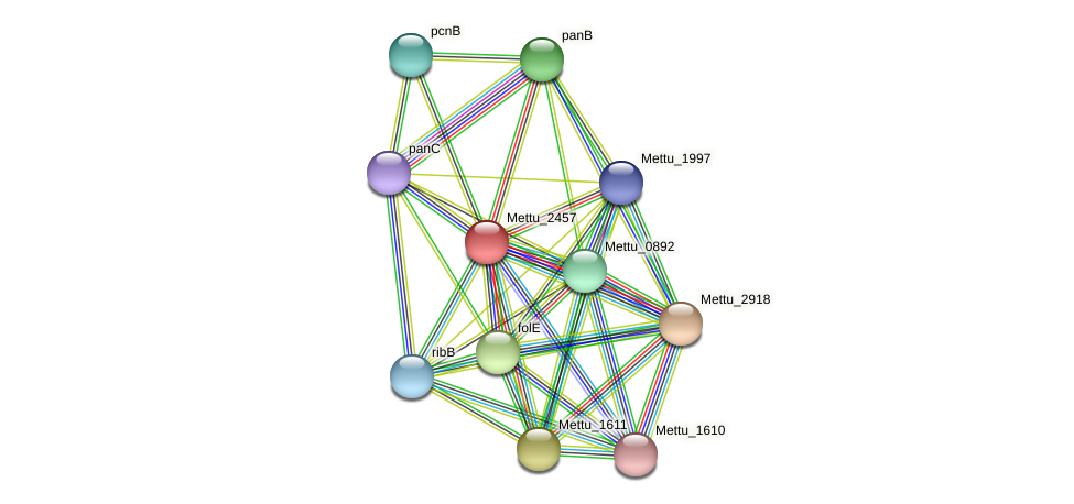 Mettu_2457 protein (Methylobacter tundripaludum) - STRING interaction network