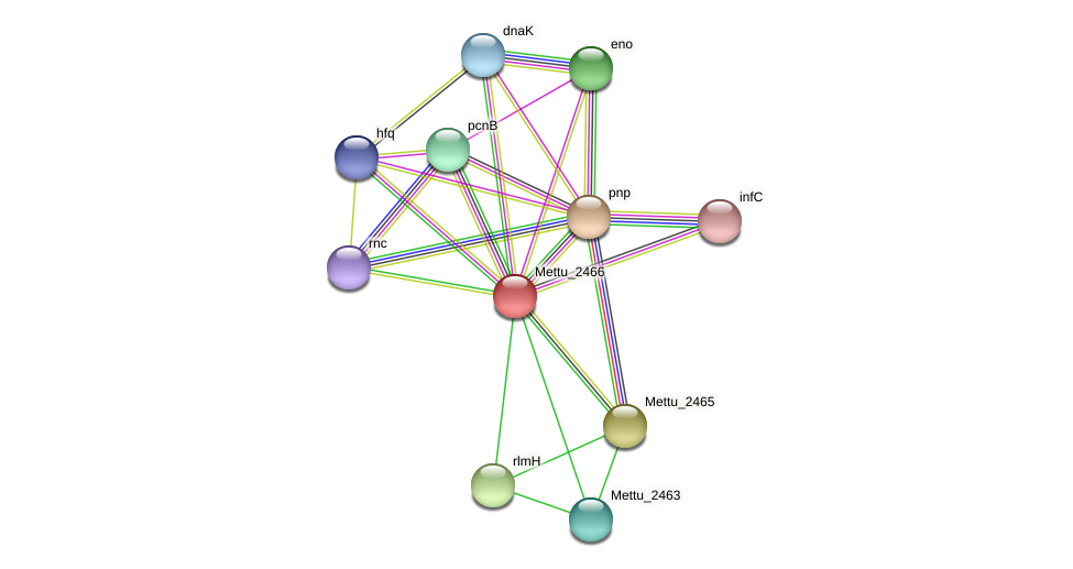 Mettu_2466 protein (Methylobacter tundripaludum) - STRING interaction network
