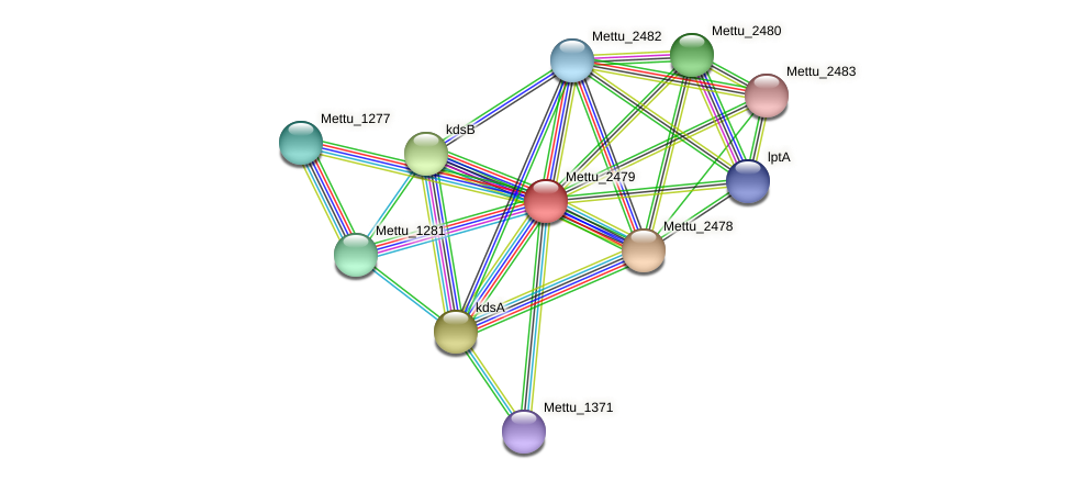 Mettu_2479 protein (Methylobacter tundripaludum) - STRING interaction network