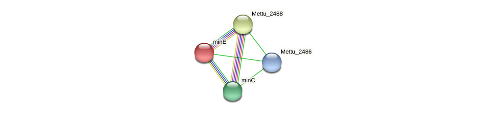 minE protein (Methylobacter tundripaludum) - STRING interaction network