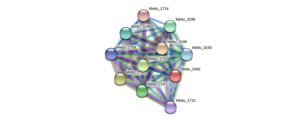 Mettu_2492 protein (Methylobacter tundripaludum) - STRING interaction network