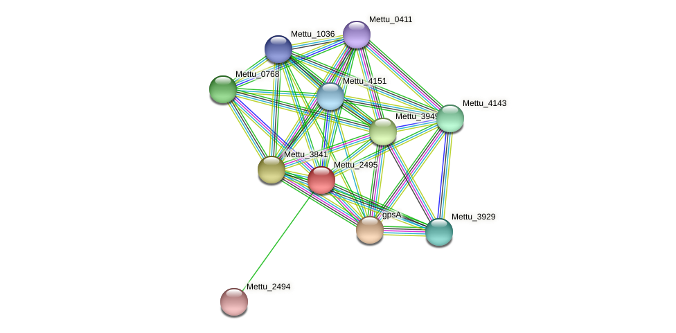 Mettu_2495 protein (Methylobacter tundripaludum) - STRING interaction network