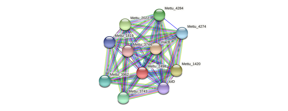 Mettu_2498 protein (Methylobacter tundripaludum) - STRING interaction network