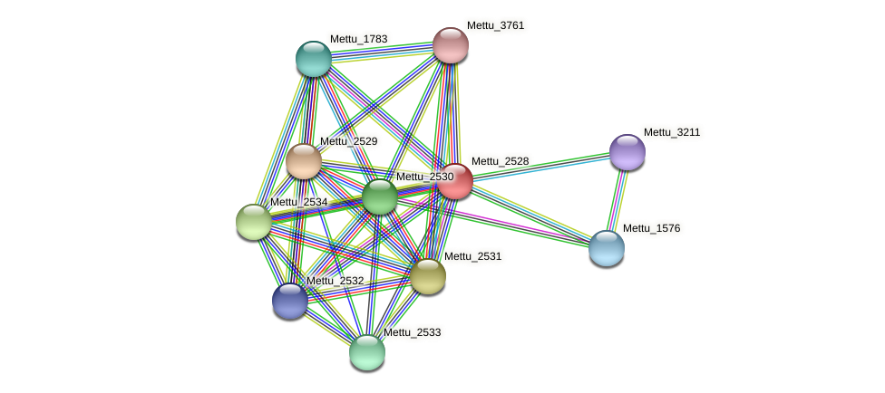 Mettu_2528 protein (Methylobacter tundripaludum) - STRING interaction network