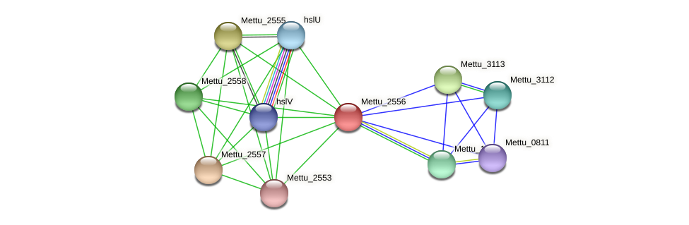 Mettu_2556 protein (Methylobacter tundripaludum) - STRING interaction network