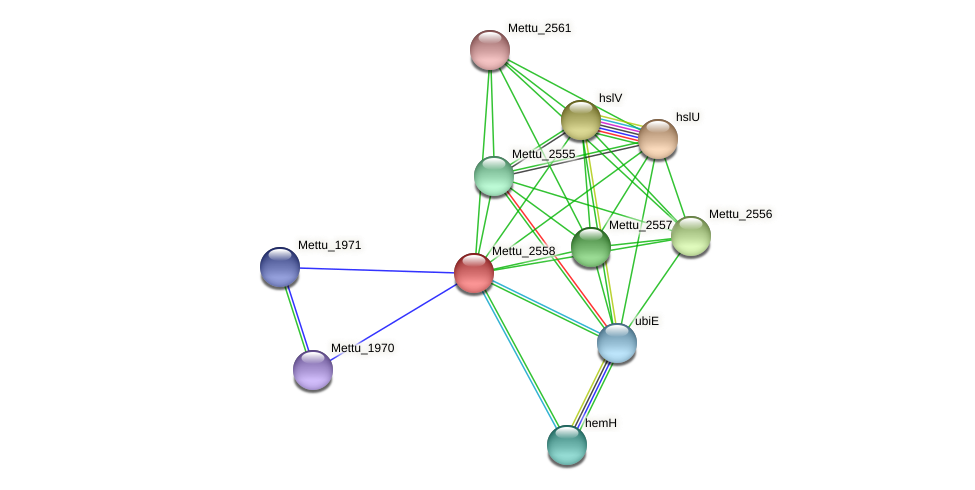 Mettu_2558 protein (Methylobacter tundripaludum) - STRING interaction network