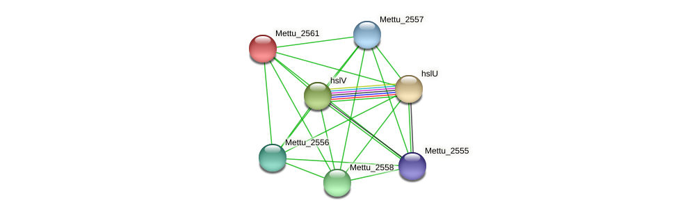 Mettu_2561 protein (Methylobacter tundripaludum) - STRING interaction network