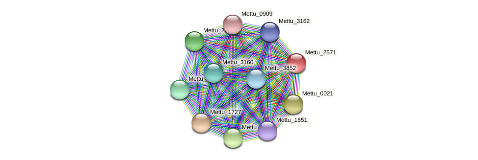Mettu_2571 protein (Methylobacter tundripaludum) - STRING interaction network