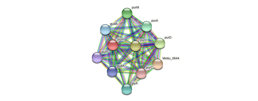 purH protein (Methylobacter tundripaludum) - STRING interaction network