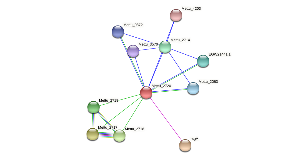 Mettu_2720 protein (Methylobacter tundripaludum) - STRING interaction network