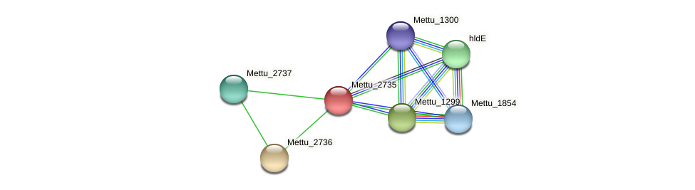 Mettu_2735 protein (Methylobacter tundripaludum) - STRING interaction network