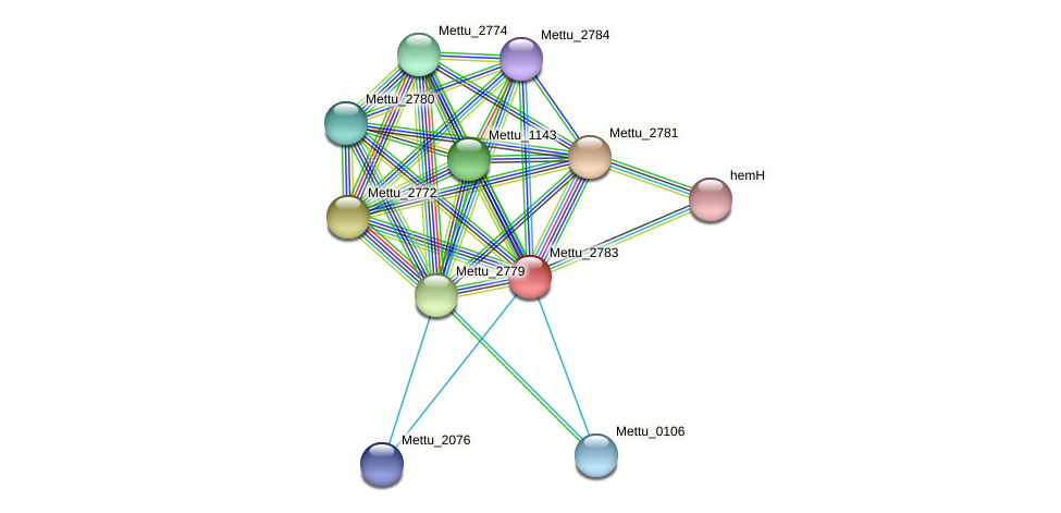 Mettu_2783 protein (Methylobacter tundripaludum) - STRING interaction network