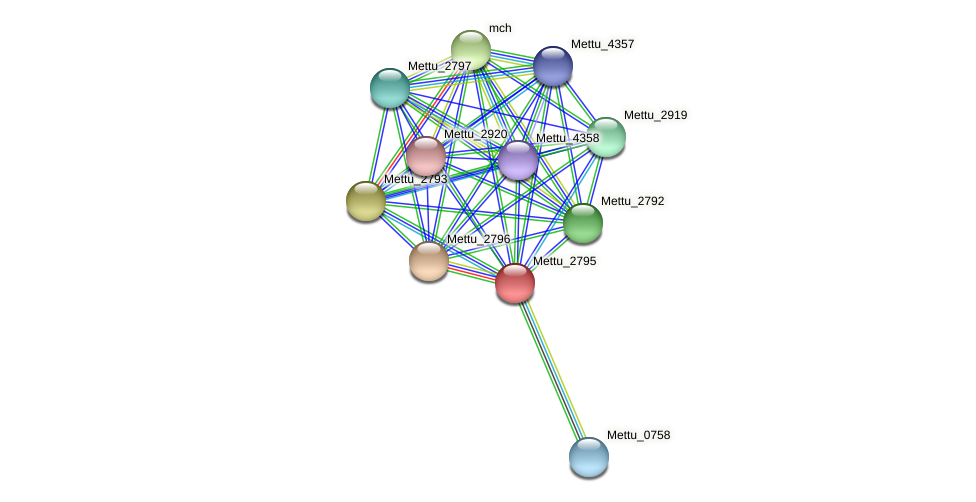 Mettu_2795 protein (Methylobacter tundripaludum) - STRING interaction network