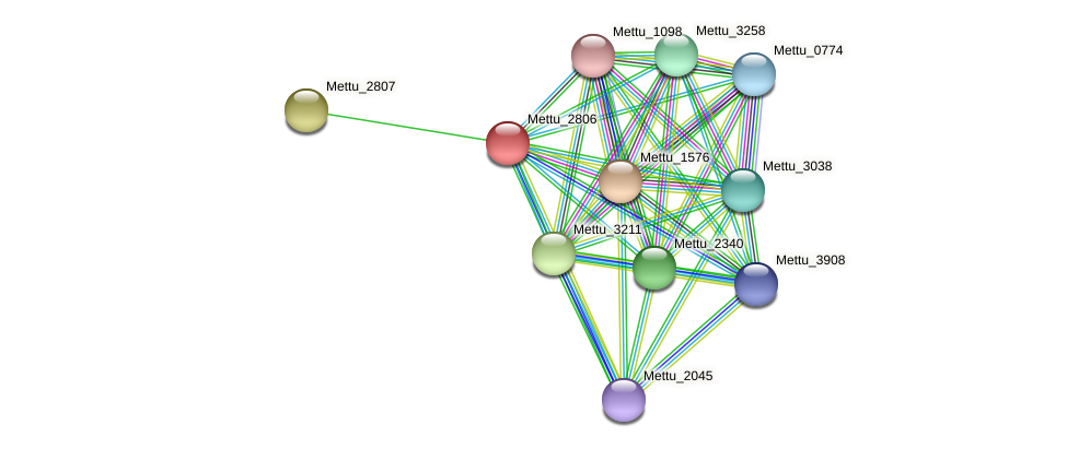 Mettu_2806 protein (Methylobacter tundripaludum) - STRING interaction network