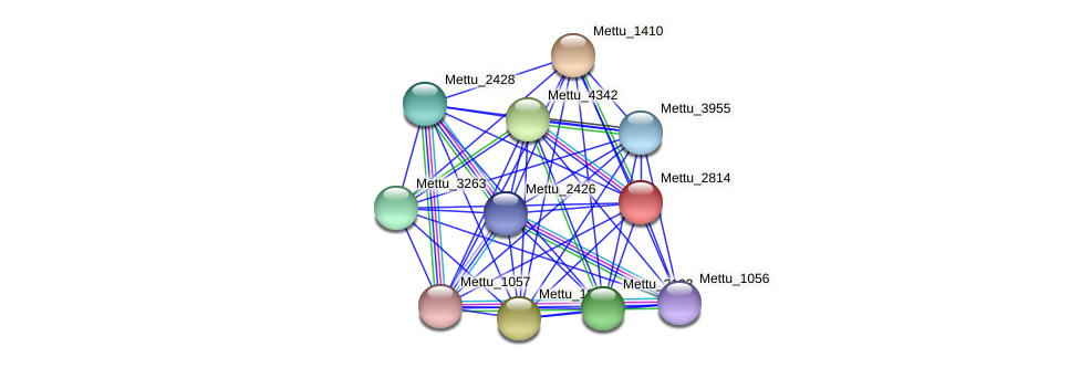 Mettu_2814 protein (Methylobacter tundripaludum) - STRING interaction network