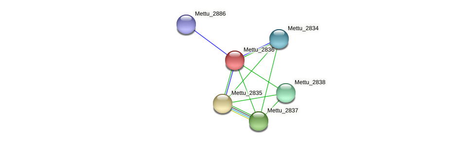 Mettu_2836 protein (Methylobacter tundripaludum) - STRING interaction network