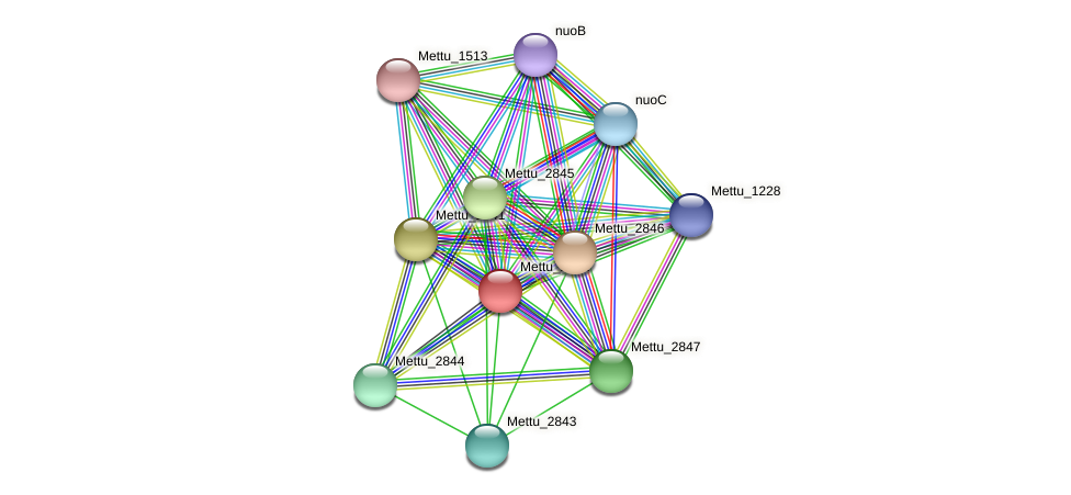 Mettu_2842 protein (Methylobacter tundripaludum) - STRING interaction network