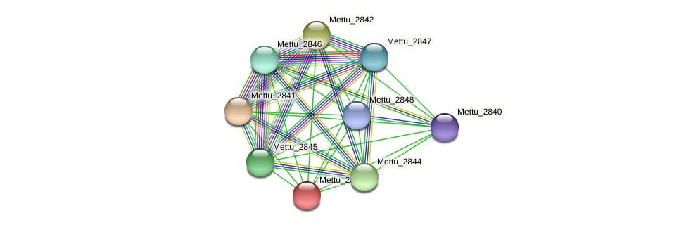 Mettu_2843 protein (Methylobacter tundripaludum) - STRING interaction network
