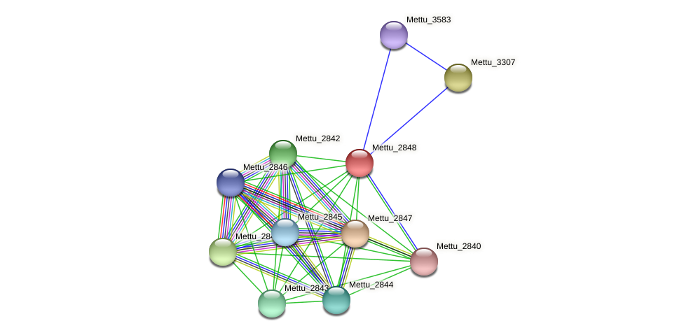 Mettu_2848 protein (Methylobacter tundripaludum) - STRING interaction network