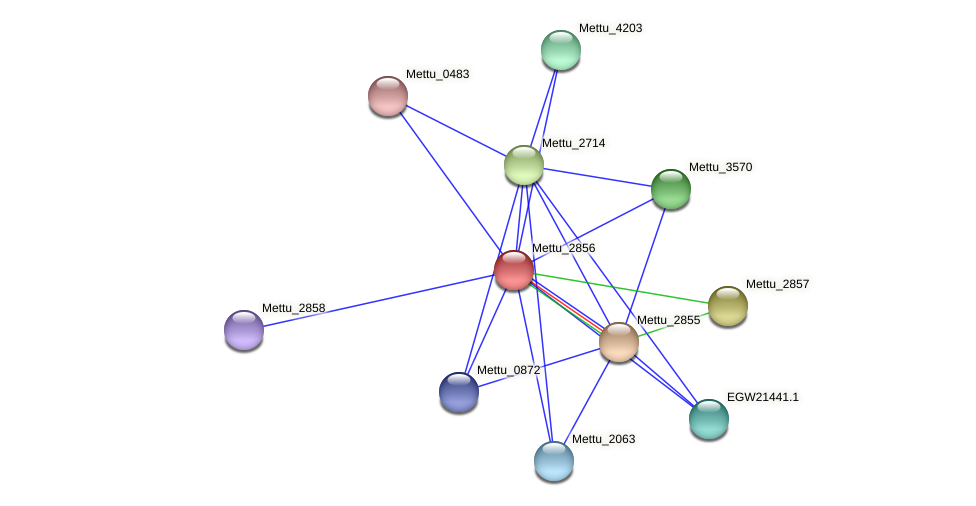Mettu_2856 protein (Methylobacter tundripaludum) - STRING interaction network