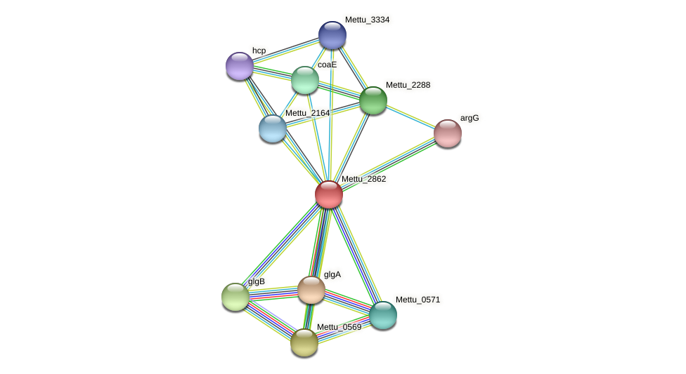 Mettu_2862 protein (Methylobacter tundripaludum) - STRING interaction network