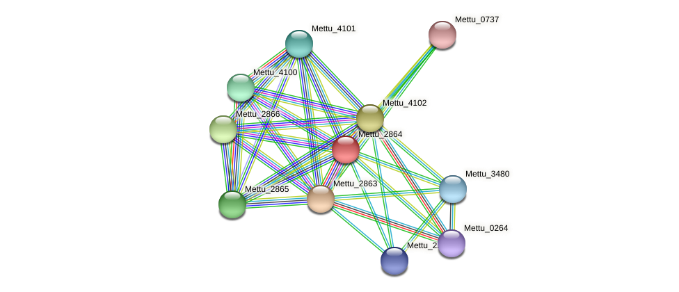Mettu_2864 protein (Methylobacter tundripaludum) - STRING interaction network