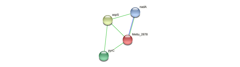 Mettu_2878 protein (Methylobacter tundripaludum) - STRING interaction network