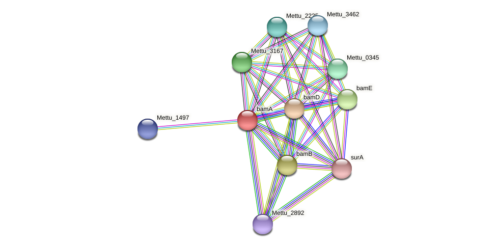 bamA protein (Methylobacter tundripaludum) - STRING interaction network