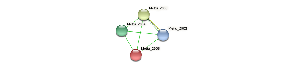 Mettu_2906 protein (Methylobacter tundripaludum) - STRING interaction network