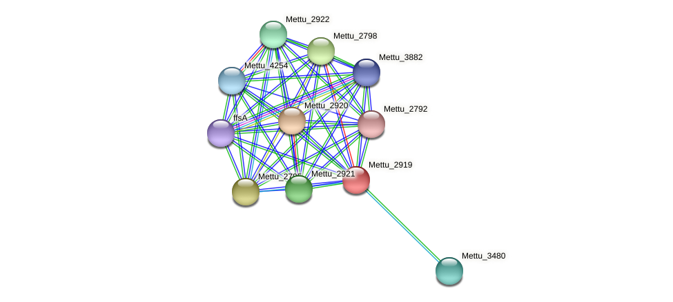 Mettu_2919 protein (Methylobacter tundripaludum) - STRING interaction network