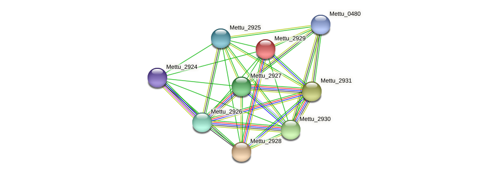 Mettu_2929 protein (Methylobacter tundripaludum) - STRING interaction network