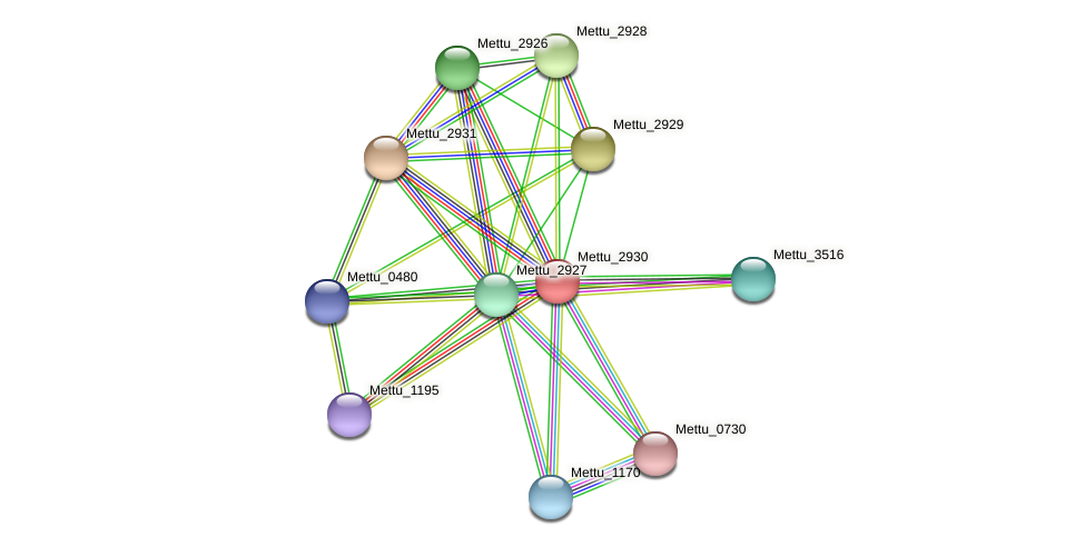 Mettu_2930 protein (Methylobacter tundripaludum) - STRING interaction network