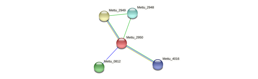 Mettu_2950 protein (Methylobacter tundripaludum) - STRING interaction network
