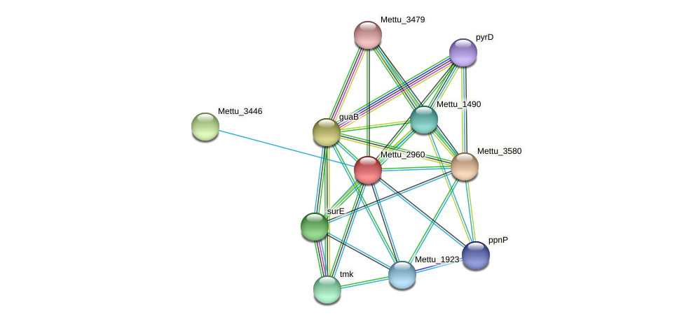 Mettu_2960 protein (Methylobacter tundripaludum) - STRING interaction network