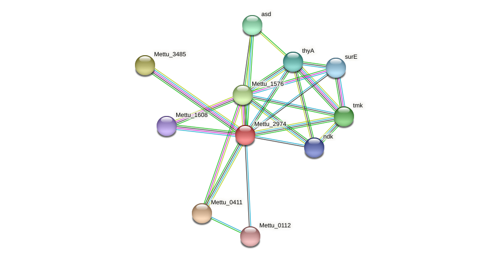 Mettu_2974 protein (Methylobacter tundripaludum) - STRING interaction network