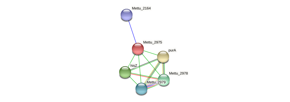 Mettu_2975 protein (Methylobacter tundripaludum) - STRING interaction network