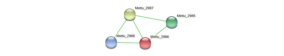 Mettu_2986 protein (Methylobacter tundripaludum) - STRING interaction network