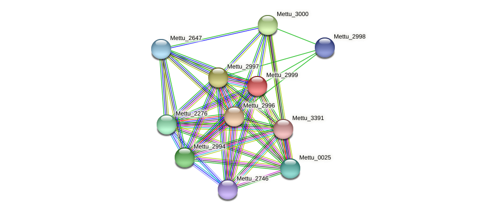 Mettu_2999 protein (Methylobacter tundripaludum) - STRING interaction network