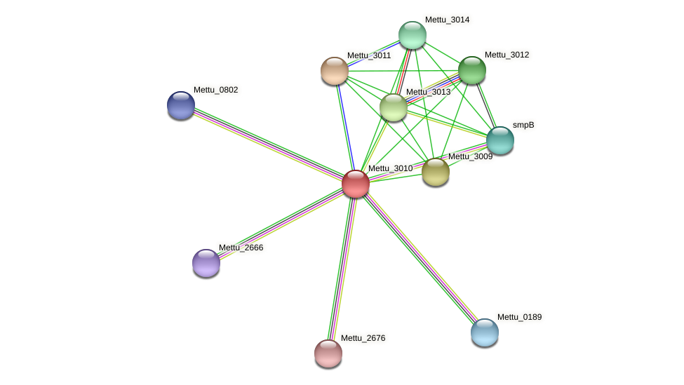Mettu_3010 protein (Methylobacter tundripaludum) - STRING interaction network