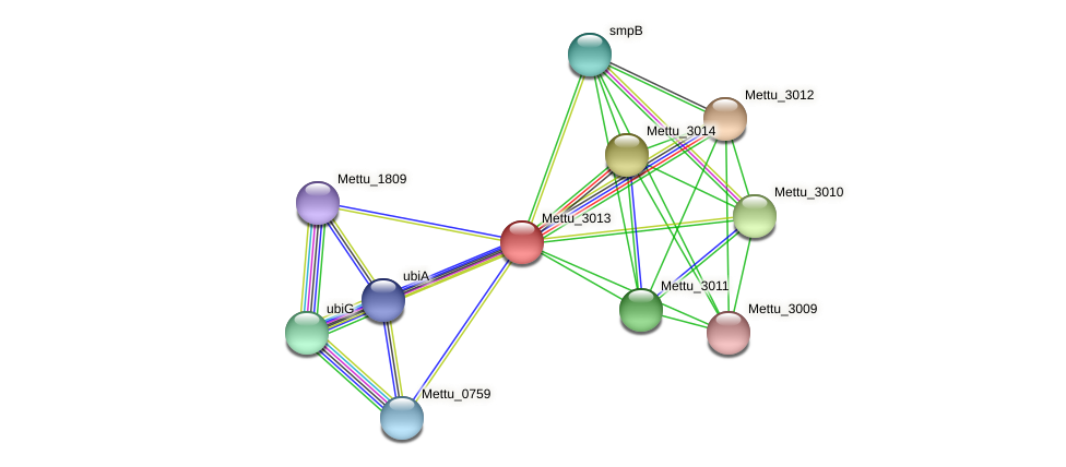 Mettu_3013 protein (Methylobacter tundripaludum) - STRING interaction network