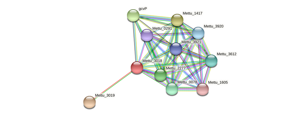 Mettu_3018 protein (Methylobacter tundripaludum) - STRING interaction network