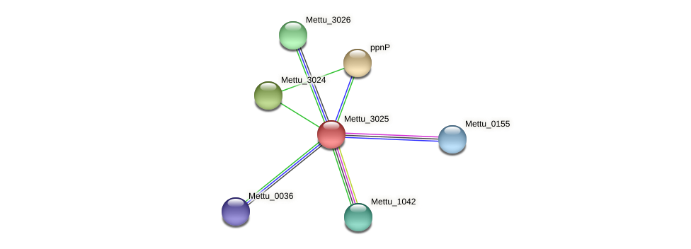 Mettu_3025 protein (Methylobacter tundripaludum) - STRING interaction network