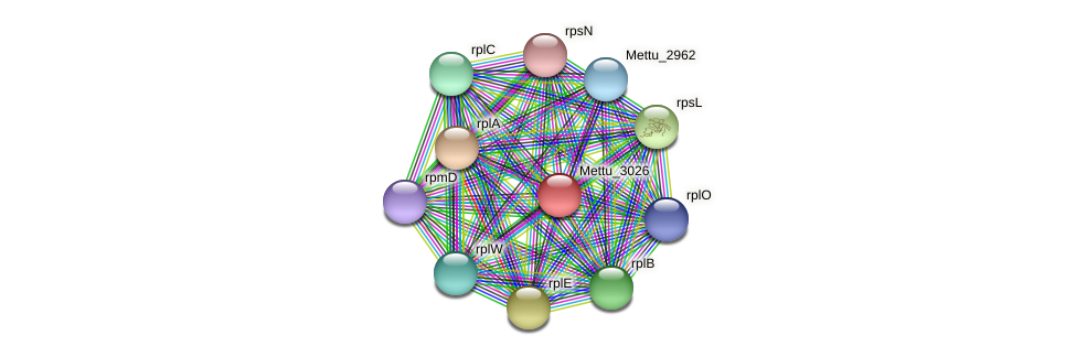 Mettu_3026 protein (Methylobacter tundripaludum) - STRING interaction network