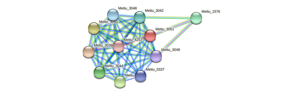 Mettu_3051 protein (Methylobacter tundripaludum) - STRING interaction network