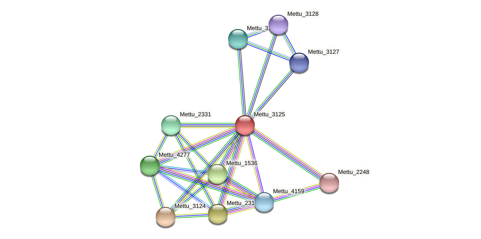 Mettu_3125 protein (Methylobacter tundripaludum) - STRING interaction network