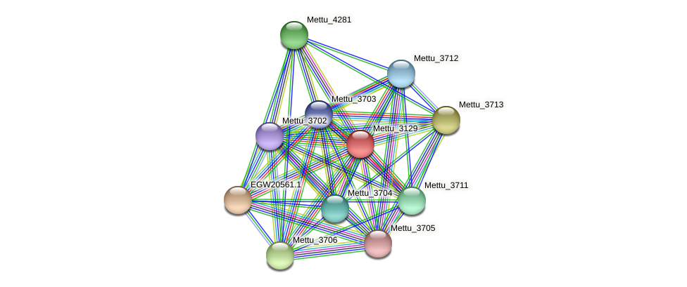 Mettu_3129 protein (Methylobacter tundripaludum) - STRING interaction network