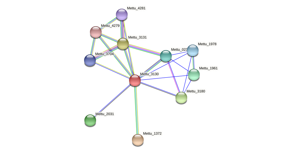 Mettu_3130 protein (Methylobacter tundripaludum) - STRING interaction network