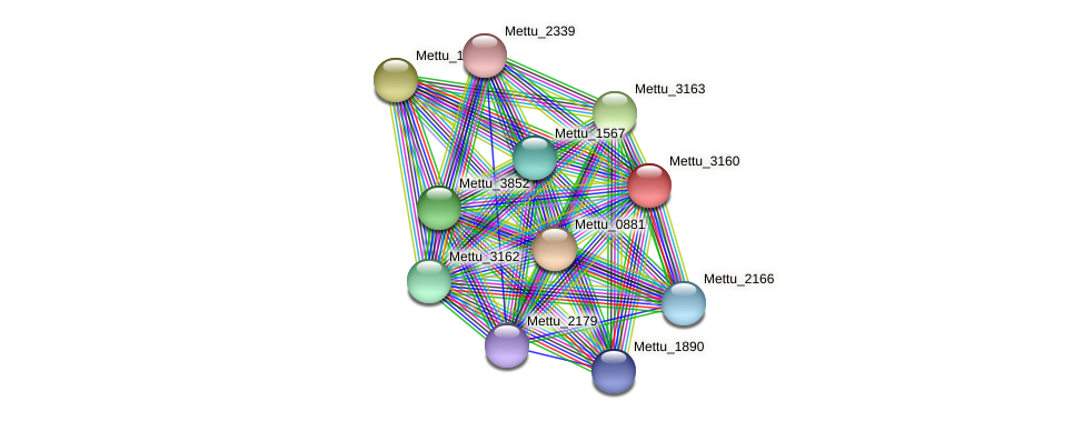 Mettu_3160 protein (Methylobacter tundripaludum) - STRING interaction network