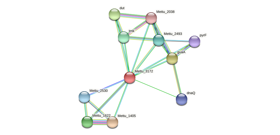 Mettu_3172 protein (Methylobacter tundripaludum) - STRING interaction network